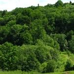 """Padurea de argint"" – The Silver Forest – Neamt County"