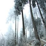 Route in Ceahlau: Izvorul Muntelui – Dochia Chalet (Lutu Rosu)