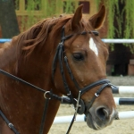 The Opening of the Equestrian School from Piatra Neamt, April 2010