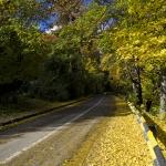 Autumn Sceneries in Piatra Neamt