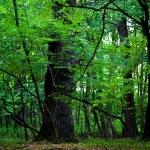 Touristic Attractions in Vanatori Natural Park