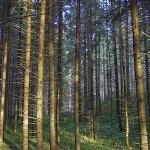 Tourist routes in Vanatori-Neamt Nature Park
