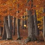 "Autumn walk on the route Piatra Neamt – ""Trei Caldari"" Rock"