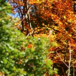 Copper woods – autumn colors