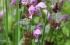 A wonderful spring!
