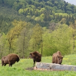 Discover the tourist attractions in Vânători Neamţ Natural Park