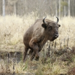 BISON LAND from Neamţ County as seen by 9 photography enthusiasts