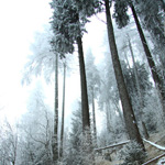 trekking-route-ceahlau-carpathians-neamt