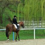 program-prices-equestrian-complex-piatra-neamt