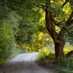 toward-schitul-lipovenesc-hermitage