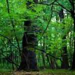 vanatori-park-natural-reservations