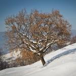 lacul-batca-doamnei-iarna