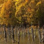 09-toamna-lacul-cuejdel-2012