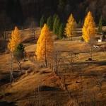 10-toamna-izvorul-muntelui-2012