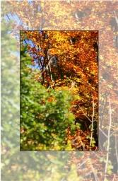 Copper woods – autumn colors