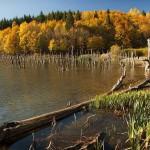 Lake Cuejdel