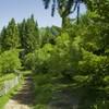 Hiking from Cheile Bicazului to Barnadu Village and Vithovos Peak