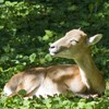 Aurochs Reservation Neamt