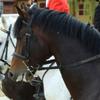 Equestrian Complex Piatra Neamt 2010