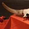 Prehistoric mammals exhibition