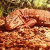 Reptile exhibition 2013