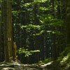 Hiking in Ceahlau: Izvorul Muntelui - Poiana Maicilor - Dochia