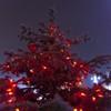 December 2013 lights in Piatra Neamt