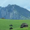 Cheile Bicazului Hiking Route: Cheile Bicajelului - the road Drumul Surducului