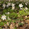 Spring time in Negulesti