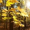 Autumn in the Oak reservation Dumbrava 2012