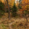 Late autumn in Neamt County 2012