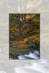Autumn Sceneries in Cheile Bicazului