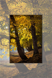 Autumn scenes toward Agapia