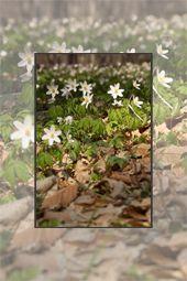 Springtime in Negulesti area