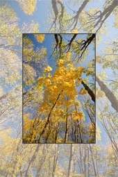 Autumn at the Oak Reservation Dumbrava 2012