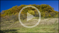 Codrii de Arama Forest - Neamt County