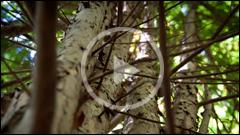 The Yew Reservation - Pangarati